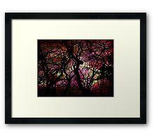 Forest Rainbow Framed Print