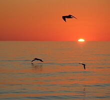 Sunset Flight by Bob Hardy