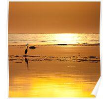 Blue Heron, Golden Hour Poster