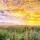 Misty Morning Gold - Byron Bay by Cheryl Styles
