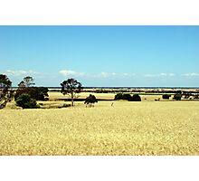 Dry Australian Landscape Photographic Print