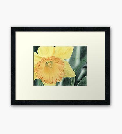 Daffodil Dayz Framed Print