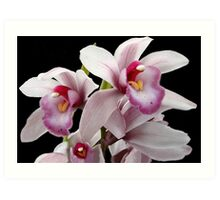 Orchid Family Tree? Art Print