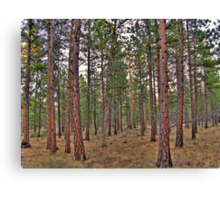 ponderosa trail Canvas Print