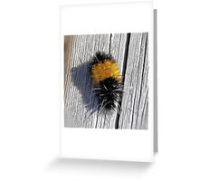 Banded Woolly Bear  Greeting Card