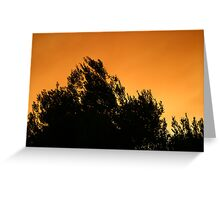 Olive Tree Silhouette At Sunset Greeting Card