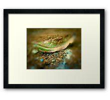 leaf matter Framed Print
