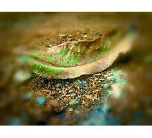leaf matter Photographic Print