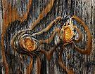 Wood knots by Alex Preiss