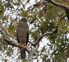Guarding the Nest by byronbackyard
