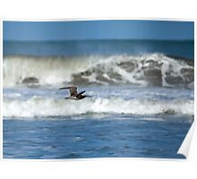 Whimbrel Flying by Ocean Poster