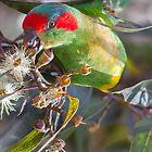 Parrot by Bhavin Jadav