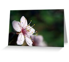 Pink Cherry Blossom_3 Greeting Card