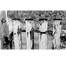 White Fence. Photographic Print