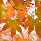 Autumn Joy by JennyRainbow