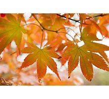 Autumn Joy Photographic Print