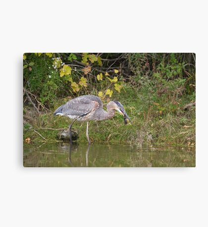 Surprise catch of the day! Canvas Print