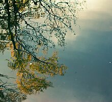 Fall Reflection by Pierre-Etienne Vachon