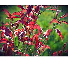 Fall is here Photographic Print