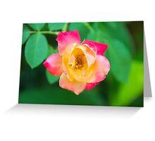 Tri-Color Rose Greeting Card