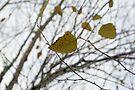Autumn 1 by ©Dawne M. Dunton
