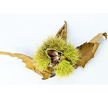 Chestnuts Photographic Print