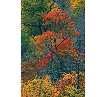 AUTUMN TREES BELOW THE CHIMNEYS Photographic Print