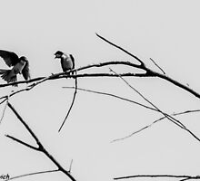 Two Birds Arguing Over A Branch by Danny Vukobratovich