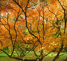 Vivid Autumn V by Chris Tarling