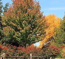 Split Rail Fence and Fall Colors by Galen Obermeyer