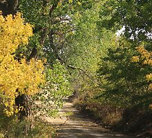 Kansas Cottonwoods Along Country Road by Galen Obermeyer