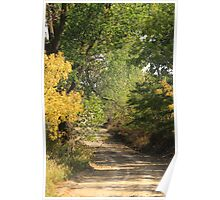Kansas Cottonwoods Along Country Road Poster