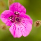 Macro Flower by Chris Tarling
