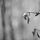 Autumn Leaves, Lindinny Woods, Scottish Borders by Iain MacLean