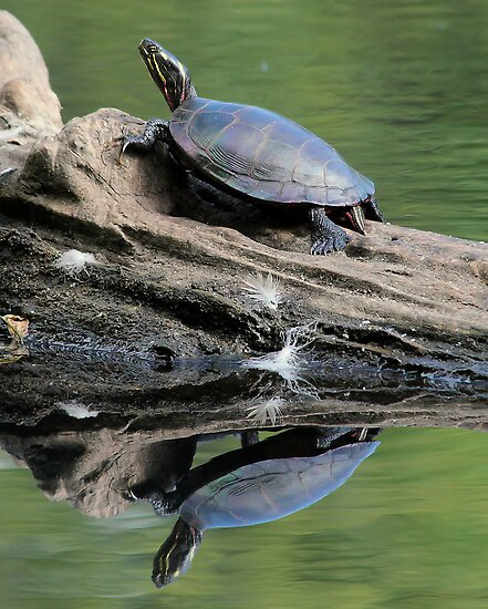 Turtle and the Terrapin by Ken Glotfelty