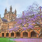 Spring Colour at Sydney Uni by Michael Matthews