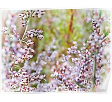 Delicate pink Blossom Poster
