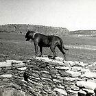 Standing on the Wall by SierraMLatkje