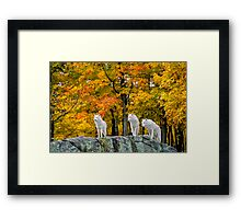 On Patrol Framed Print