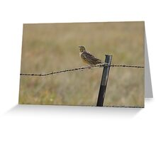 Kansas Meadowlark perched on the Barbwire Fence Greeting Card