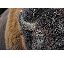 Bison up close Photographic Print