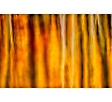 Fallscape Photographic Print