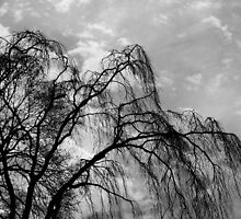 Willow Tree Against the Sky, Black and White by Jane Neill-Hancock