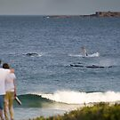 Whales @ City Beach Wollongong by 16images