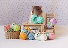 Snoozy wanted to knit ! by Ellen van Deelen