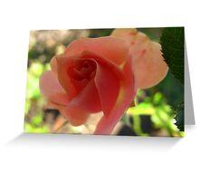 Peach dream Greeting Card