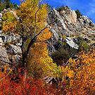 Towering Fall by Arla M. Ruggles