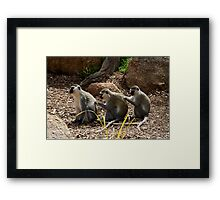 Vervet Monkeys - You Scratch My Back... Framed Print