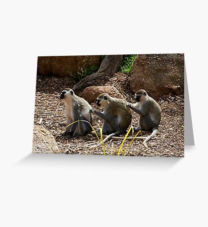 Vervet Monkeys - You Scratch My Back... Greeting Card