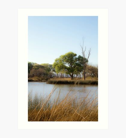 Calm Beaver Pond Art Print